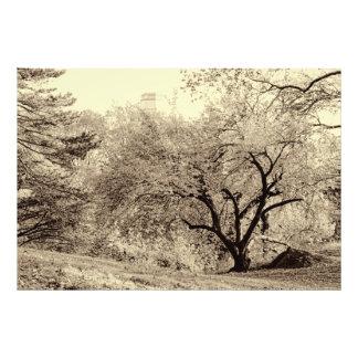 Árbol negro y blanco del invierno del paisaje en arte con fotos