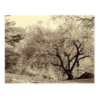 Árbol negro y blanco del invierno del paisaje en postal