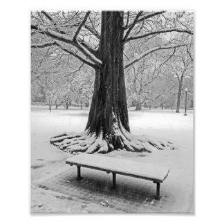Árbol Nevado el jardín público Boston mA Fotografía