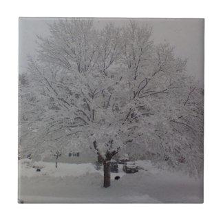 Árbol nevado en Maine Azulejo Cuadrado Pequeño