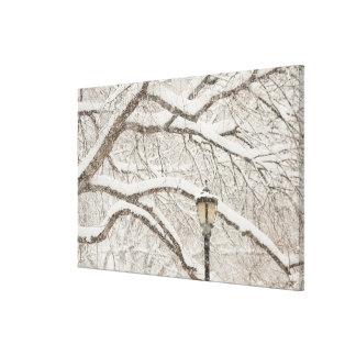 Árbol nevado impresión en lienzo estirada