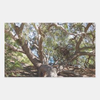 Árbol no identificado en la costa de California Rectangular Pegatinas