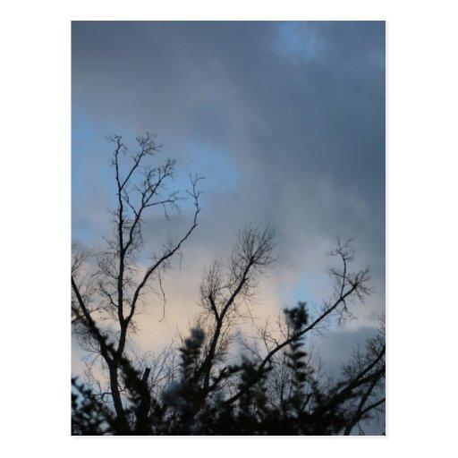 Árbol nublado #2 de la puesta del sol postal