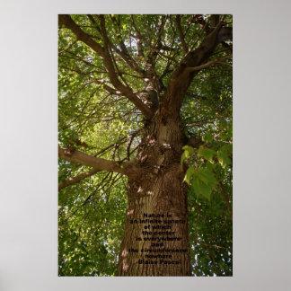 Árbol Impresiones
