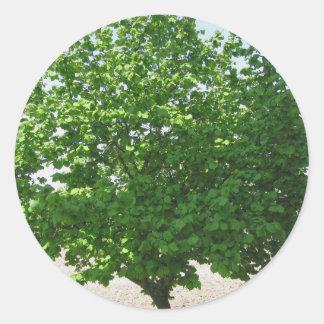 Árbol pardo con las hojas verdes pegatina redonda