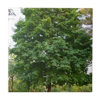 Árbol perfecto azulejo cuadrado pequeño