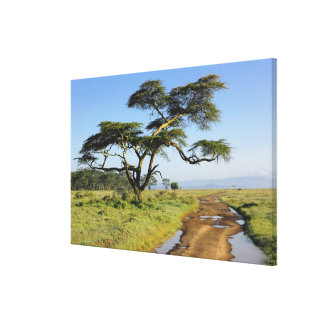 Árbol primitivo del camino de tierra y del acacia, lienzo envuelto para galerías