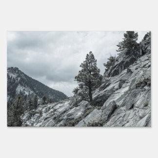 Árbol que crece fuera de las rocas letrero