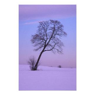 Árbol que se inclina en el campo Nevado; El condad Cojinete