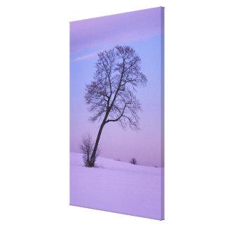 Árbol que se inclina en el campo Nevado; El condad Lona Estirada Galerías