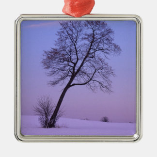 Árbol que se inclina en el campo Nevado; El Adorno Cuadrado Plateado