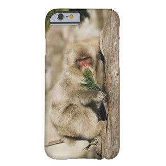 Árbol que sube del Macaque japonés, comiendo las Funda De iPhone 6 Barely There