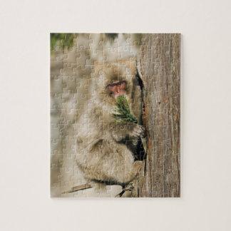 Árbol que sube del Macaque japonés, comiendo las h Puzzle