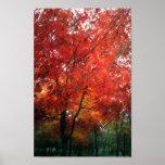 Árbol rojo del otoño impresiones