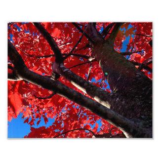 Árbol rojo fotografía
