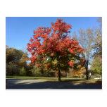 Árbol rojo postales