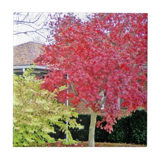 Árbol rojo vibrante de la caída teja