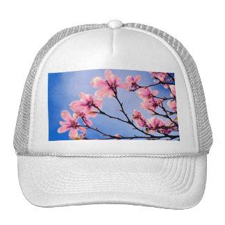 árbol rosado hermoso de la primavera gorra