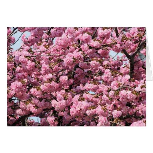 árbol rosado tarjeton