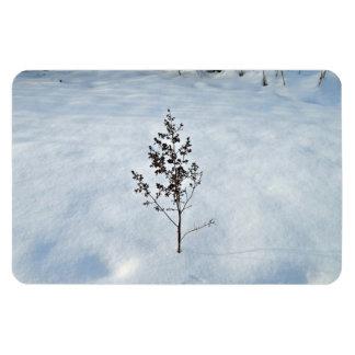 Árbol seco de las ramas que se pega fuera de la ni imán