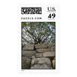 árbol sobre la pared de piedra