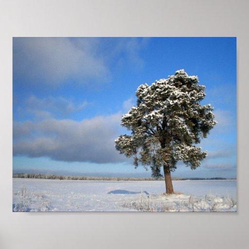 Árbol solitario de congelación póster