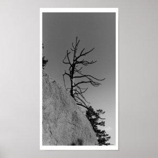 Árbol solitario del cielo, foto digital por la mar impresiones