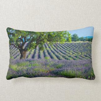 Árbol solitario en el campo púrpura de la lavanda almohada