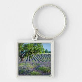 Árbol solitario en el campo púrpura de la lavanda llavero cuadrado plateado