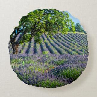 Árbol solitario en el campo púrpura de la lavanda
