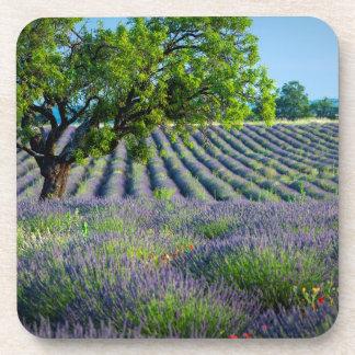 Árbol solitario en el campo púrpura de la lavanda posavasos de bebida