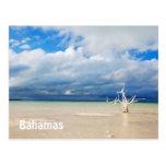 Árbol solitario en la playa postal