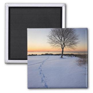 Árbol solitario en nieve fresca en el nuevo campo  imán cuadrado