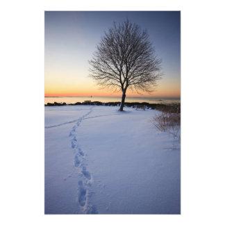 Árbol solitario en nieve fresca en el nuevo campo foto