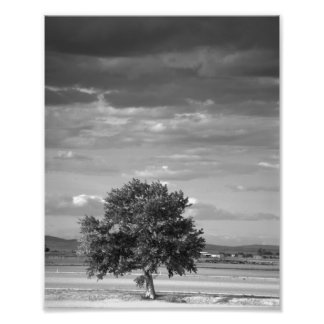 Árbol solitario, Idaho más salvaje Fotografias
