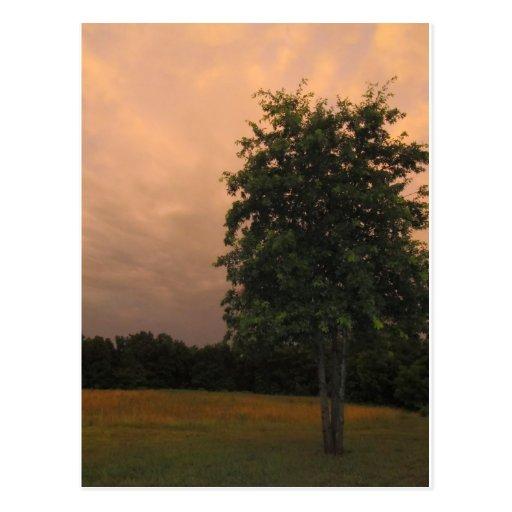 Árbol solitario postal
