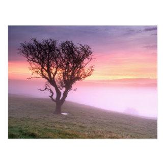 Árbol solitario y salida del sol brumosa rosada - tarjetas postales