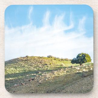 Árbol solo en las montañas Colorado Posavasos De Bebida