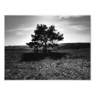 Árbol solo impresion fotografica