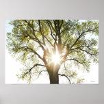 Árbol Sunlit Impresiones