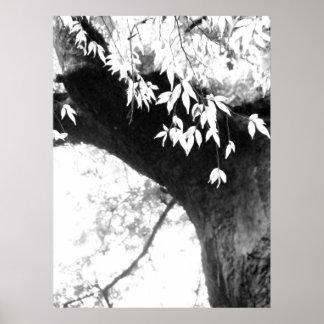 Árbol todavía l naturaleza l fotografía póster