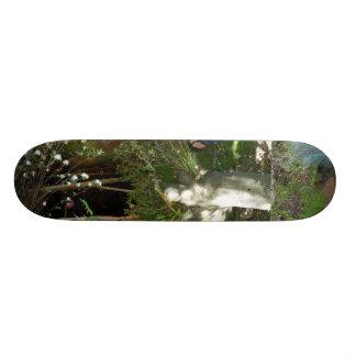 Árbol torcido - monopatín