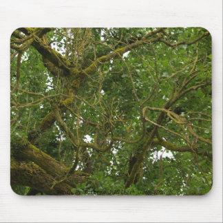 Árbol torcido tapete de ratón