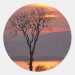 Árbol tranquilo en Quebec Pegatina Redonda