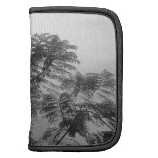 Árbol tropical blanco y negro en niebla planificador