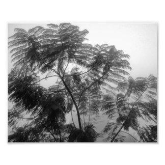 Árbol tropical blanco y negro en niebla fotografías