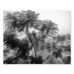 Árbol tropical blanco y negro en niebla fotos