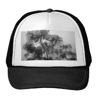 Árbol tropical blanco y negro en niebla gorro