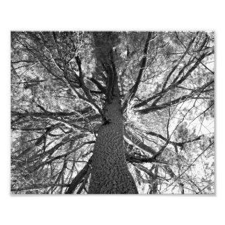 Árbol viejo de Abtract Cojinete