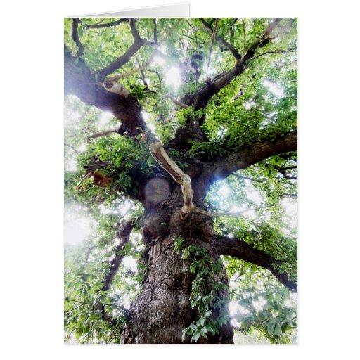 Árbol viejo de Asgard Felicitaciones